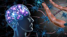 ¿Cuál es la función de la mielina?