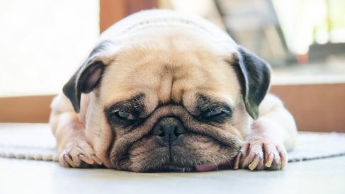 Prevención y tratamiento de la depresión en perros