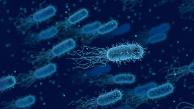 Bacteria listeria