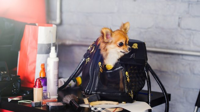 Perro pequeño en un bolso