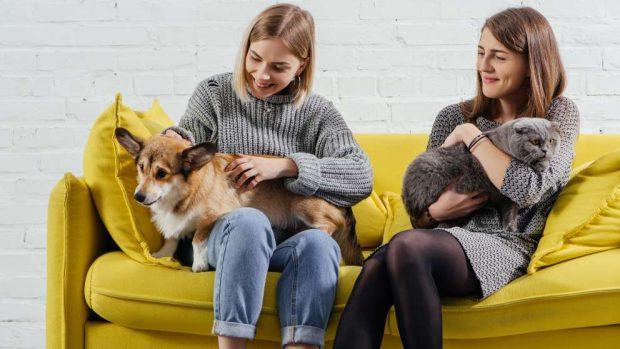 Enfermedades de perros y gatos