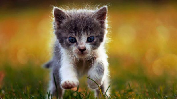 Cuidados de un gato neonato huérfano