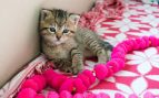 Cuidar a un gato neonato huérfano