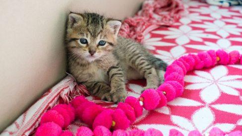 Consejos para cuidar a un gato neonato huérfano