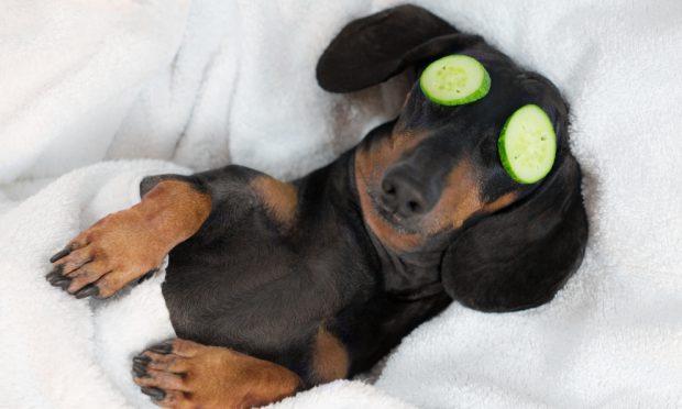 Postura de descanso en el perro