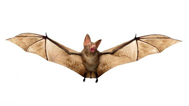 Murciélagos y vampiros