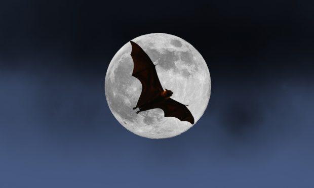 El mito de los murciélagos