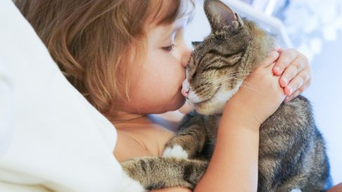 La  utilización de gatos como terapia en el autismo