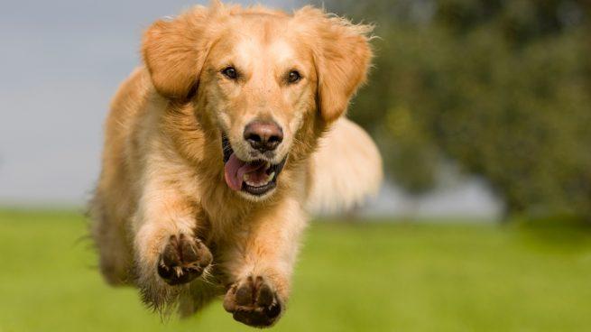 Perros más deportistas