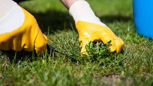 Pasos para quitar las malas hierbas del césped