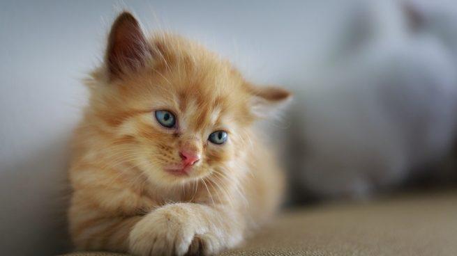 Enfermedades mortales en gatos