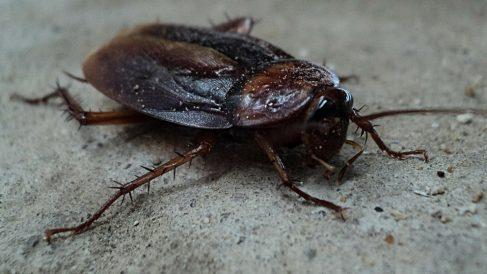 Tips para tratar una plaga de cucarachas en casa