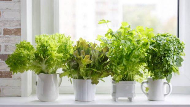 Cómo Cultivar Plantas Aromáticas En Macetas Paso A Paso De Forma Correcta
