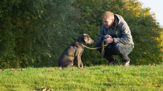 Potenciar el vínculo con tu perro