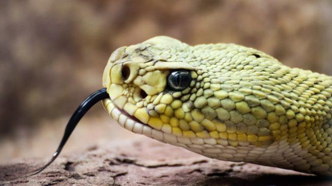Facebook: El encantador de serpientes que triunfa en las redes sociales