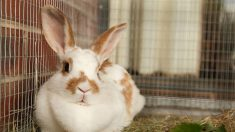 Aprende cómo construir una jaula para conejos