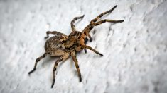 ¿Cómo evitar la presencia de arañas en casa?