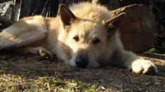 ¿Cuándo surgieron las leyes de protección animal?