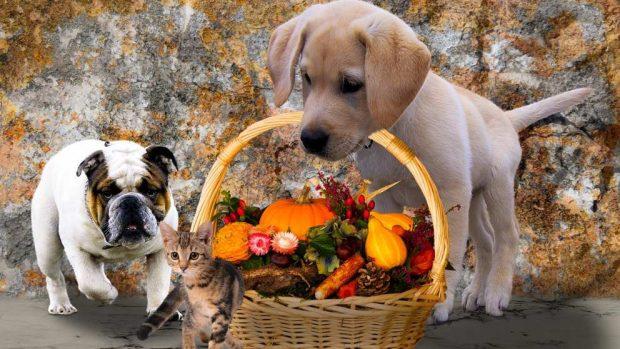 Animales y la herencia