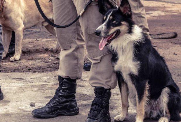 Perros para salvamento de personas