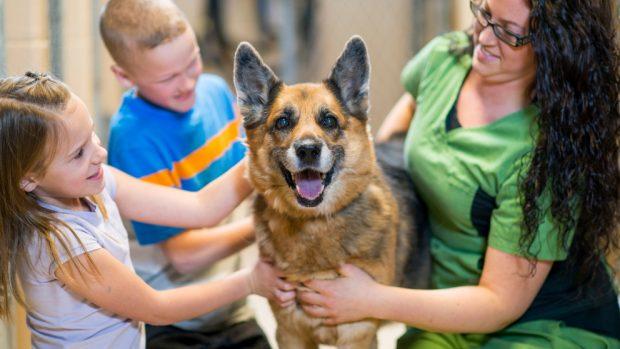 La adopción de perros