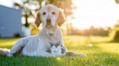 Todos los pasos para proteger el jardín de perros y gatos
