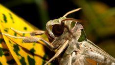 ¿Cuáles son los insectos más feos del mundo?