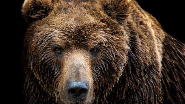 Frente a frente con un oso