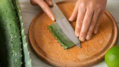 Pasos para cortar las hojas de aloe vera
