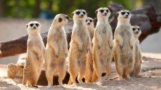 Normativa básica: La Declaración Universal de Derechos de Animales,
