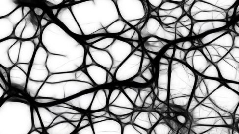 Datos sobre las neuronas de von economo