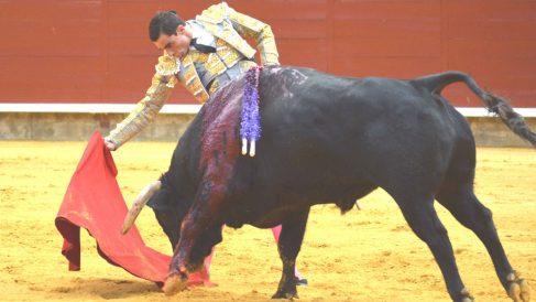 Paco Ureña momentos antes de sufrir la cornada (Foto: EFE).