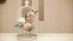Pasos para decorar con jaulas de pájaros