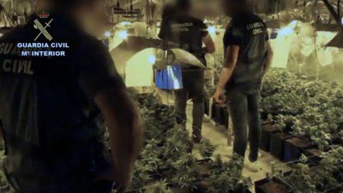 La Guardia Civil ha detenido a 23 personas en el marco de la operación Bora White, en la que ha localizado varias plantaciones de marihuana ubicadas en viviendas, cortijos y naves.