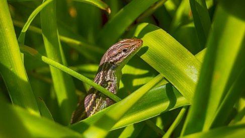 Las lagartijas son uno de los animales más curiosos de todo el mundo.