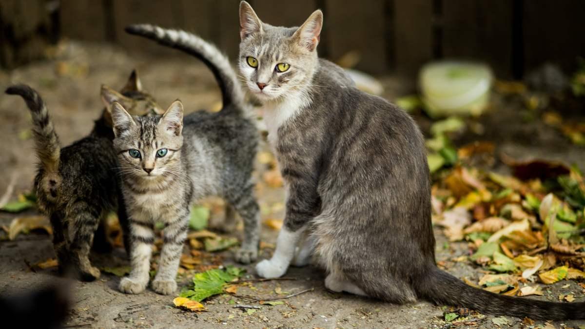 Gatos y su personalidad