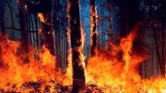 La aldea de A Carballosa, en Porto do Son ha sido afectada hoy por un gran incendio forestal en la que participan en su extinción se encuentran brigadas forestales y la Unidad Militar de emergencias «UME» así como medios aéreos. Foto:EFE