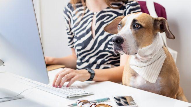 Llevar tu perro al trabajo