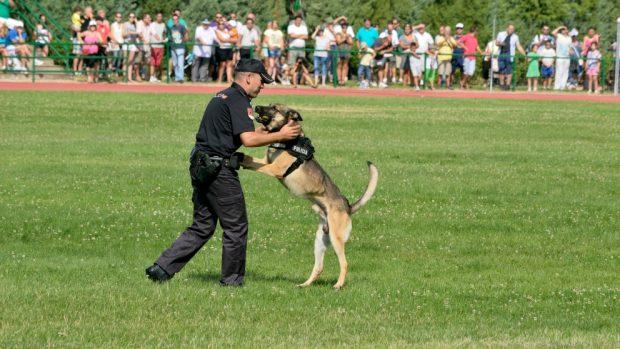Un perro policía