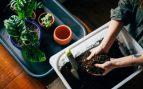 trasplantar plantas de manera facil
