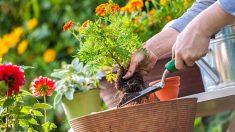 Guía de pasos para sacar las plantas de sus macetas sin romperlas