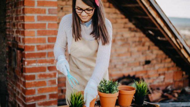 sacar plantas de sus macetas