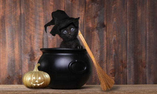 Gatos y la brujería