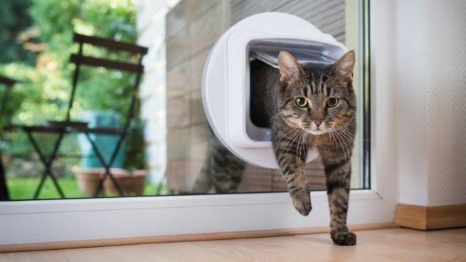 Gatos que hay en el mundo