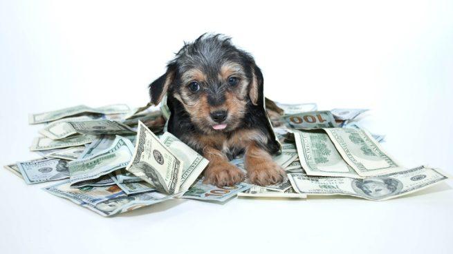Perros famosos millonarios