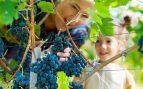 Cosecha de la uva en familia