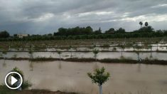 Un campo anegado en la Vega Baja. Foto: Europa Press