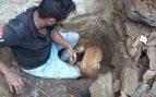 Facebook: Una perra intenta salvar a sus cachorros después de las fuertes lluvias