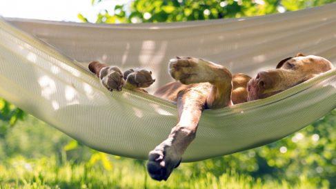 ¿Cómo son las etapas del sueño en perros y gatos?