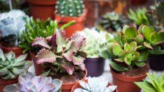 Guía de pasos para hacer un jardín en miniatura